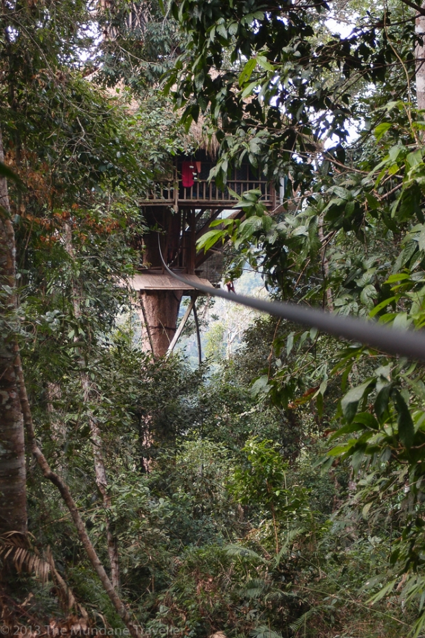"A zip-line to a ""Gibbon Experience"" tree house in Northern Laos"